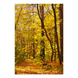 Beautiful Landscape - Road In Autumn Forest Poster