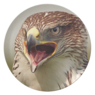 Beautiful Lanner Falcon Plate