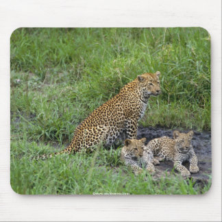 beautiful leopards cub mouse pad