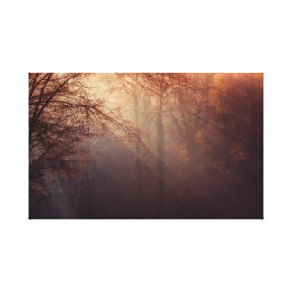 Beautiful Light in the Forest Canvas Print