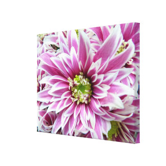 Beautiful Lilac and White Flower Canvas Print
