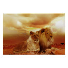 Beautiful lion couple poster