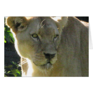 Beautiful Lioness on a note card