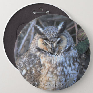 Beautiful Long-Eared Owl at Sunset 6 Inch Round Button