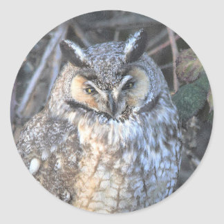 Beautiful Long-Eared Owl at Sunset Classic Round Sticker