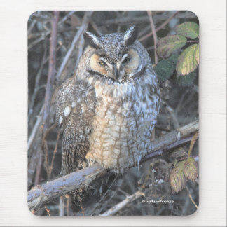 Beautiful Long-Eared Owl at Sunset Mouse Pad