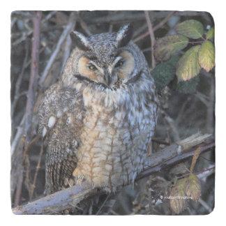 Beautiful Long-Eared Owl at Sunset Trivet