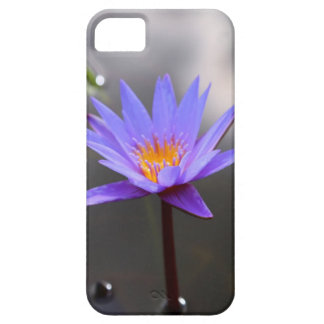 Beautiful Lotus Water Lily iPhone 5 Covers