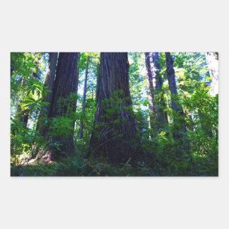 Beautiful Lush Redwood Forest