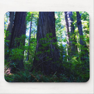 Beautiful Lush Redwood Forest Mouse Pad