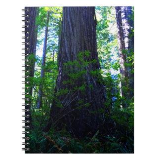 Beautiful Lush Redwood Forest Notebooks