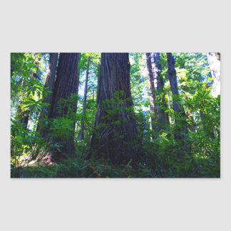 Beautiful Lush Redwood Forest Sticker
