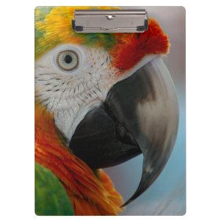 Beautiful Macaw Clipboard