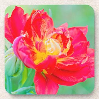 Beautiful macro tulip over green background coaster