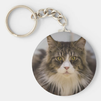 Beautiful maine coon basic round button keychain