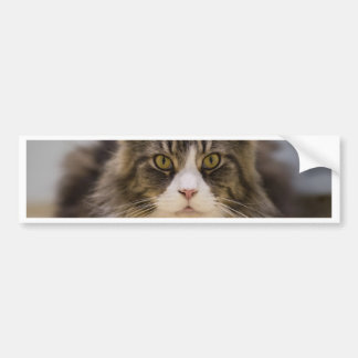 Beautiful maine coon bumper sticker