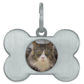 Beautiful maine coon pet ID tag