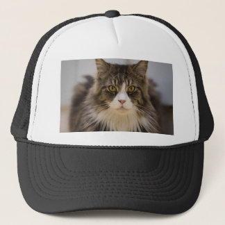 Beautiful maine coon trucker hat