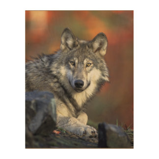 Beautiful Majestic Wolf Wildlife Woodland Wall Art Wood Canvas
