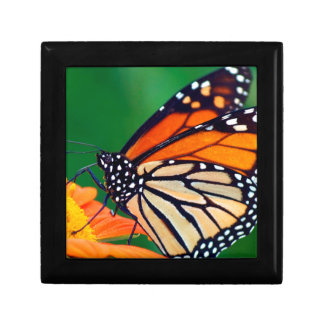 Beautiful Monarch Butterfly Gift Box