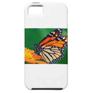 Beautiful Monarch Butterfly iPhone 5 Case
