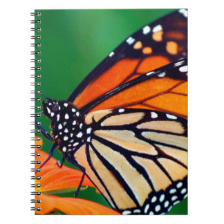 Beautiful Monarch Butterfly Notebook
