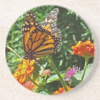 Beautiful Monarch Butterfly Resting on a Flower Coaster
