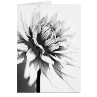 Beautiful mono Flower Greeting Card