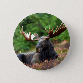 Beautiful moose with big antlers 2 inch round button