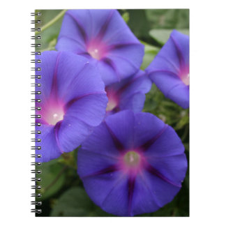 Beautiful Morning Glories in Bloom Notebooks