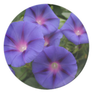 Beautiful Morning Glories in Bloom Plate