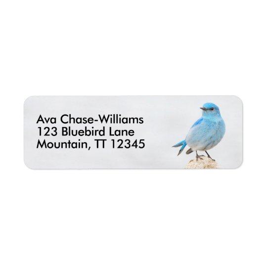 Beautiful Mountain Bluebird