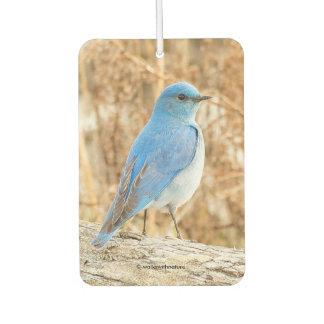 Beautiful Mountain Bluebird Air Freshener