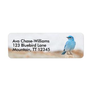 Beautiful Mountain Bluebird on the Beach