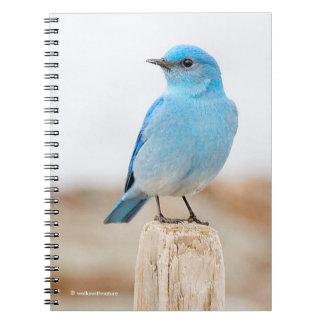Beautiful Mountain Bluebird on the Beach Notebooks