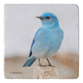 Beautiful Mountain Bluebird on the Beach Trivet