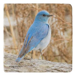 Beautiful Mountain Bluebird Trivet