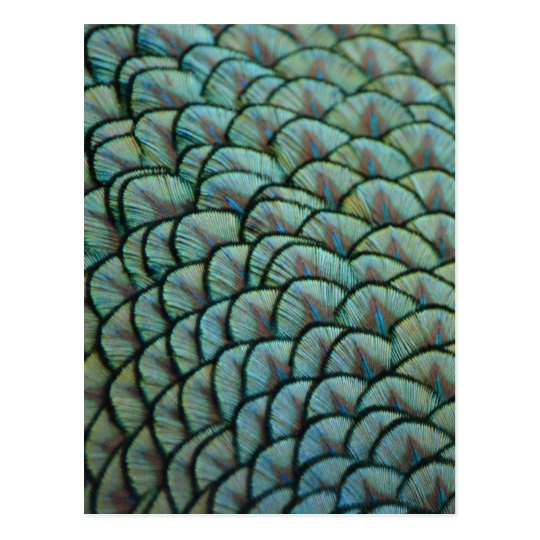 Beautiful Natural Textures - Peacock Feathers Postcard