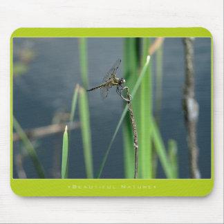 Beautiful Nature: Dragonfly - Mousepad