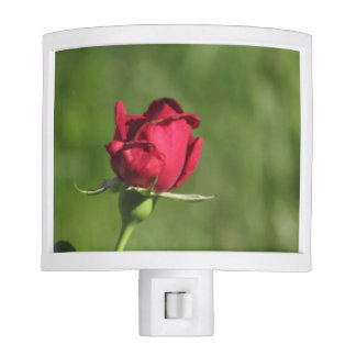 Beautiful Nightlight with Photograph of a Rose Night Lites