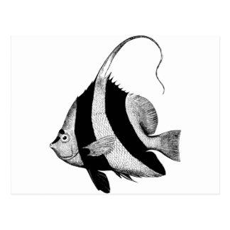 Beautiful Ocean Heniochus Macrolepidotus Fis้ Postcard