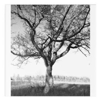 Beautiful old tree in Lake Placid NY Acrylic Print