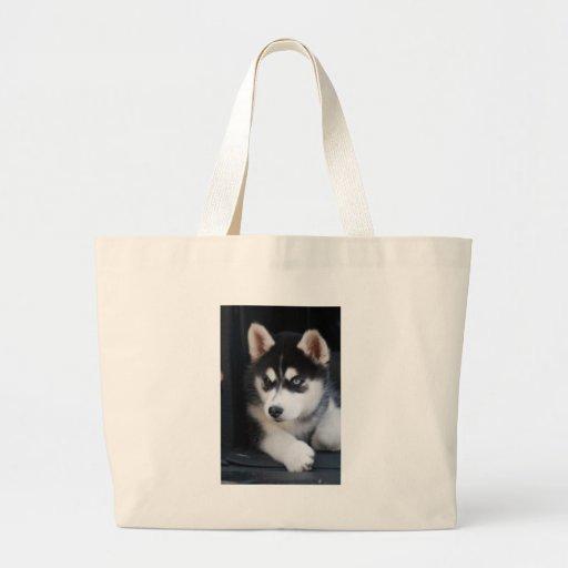 Beautiful One Blue Eye Siberian Husky 2 Bags