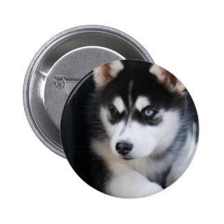 Beautiful One Blue Eye Siberian Husky 2 Button