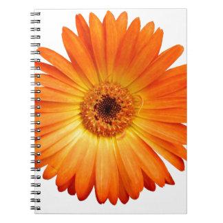 Beautiful Orange and Yellow Gerbera Daisy Notebook