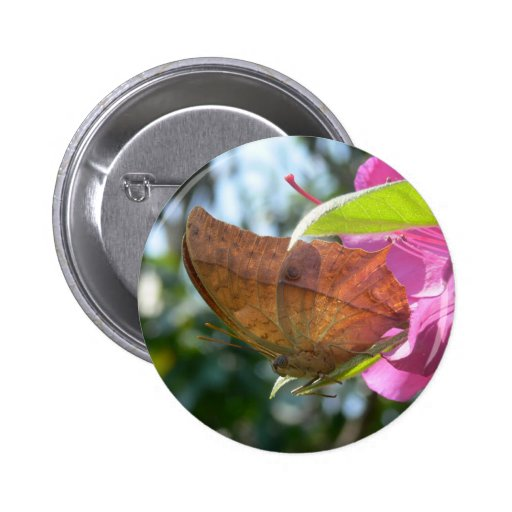 Beautiful Orange Butterfly on a Pink Flower Pinback Buttons