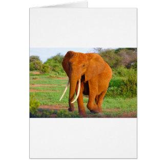 Beautiful Orange Elephant Card