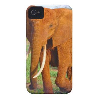 Beautiful Orange Elephant Case-Mate iPhone 4 Case