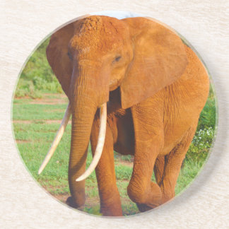 Beautiful Orange Elephant Coaster
