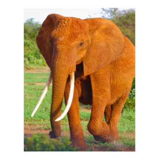 Beautiful Orange Elephant Letterhead
